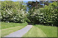 NS3518 : Path into Alton Wood by Billy McCrorie
