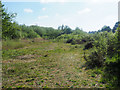 TL8294 : Area of scrub East end of Lynford Water by David Pashley