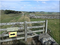 NY7868 : Hadrian's Wall at Housesteads by Rudi Winter