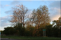 SP7642 : Woodlands by Watling Street, Potterspury by David Howard