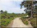 SU9129 : 'Serpent Trail' on Black Down by Roger Cornfoot