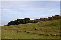 NY7868 : Whin Sill at Housesteads by Rudi Winter