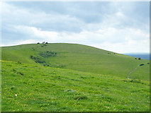 TQ2813 : Wolstonbury Hill by Robin Webster