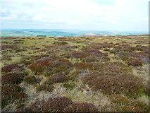SD9834 : Near the summit of Dick Delf Hill, Haworth by Humphrey Bolton