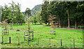 NO1791 : Parkland on Invercauld estate by Trevor Littlewood