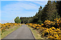 NC8839 : A897 near Loch Lucy by Chris Heaton