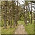 NT9320 : Woodland, Langleeford Hope by Richard Webb