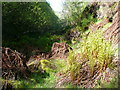 SE0908 : Ferns sprouting, Rams Clough, Meltham by Humphrey Bolton
