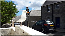 HU4741 : Street gull, Lerwick by Mike Pennington