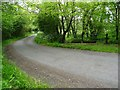 SR9998 : Country road passing Thrustle Mill by Philip Halling