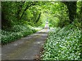 SR9898 : Springtime country road by Philip Halling
