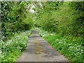 SR9898 : Country road with wild garlic in the verge by Philip Halling