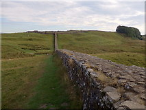 NY7968 : Hadrian's Wall east of Vercovicium by Rudi Winter