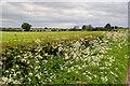 SE6789 : Cow parsley on Fadmoor Lane by Mick Garratt