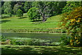 ST7734 : Stourhead Garden: View across lily pond by David Martin