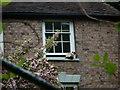 SJ6703 : Ragdoll Cat at Ironbridge by Fabian Musto