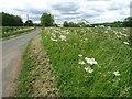 SP2136 : Roadside verge by Philip Halling