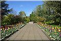 NJ2263 : Main Path in Elgin Biblical Garden, Scotland by Andrew Tryon