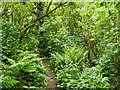 SJ5271 : Path through Ark Wood by Stephen Craven