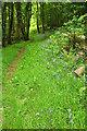 ST0101 : Path, Paradise Copse by Derek Harper