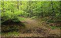 ST0001 : Path, White Down Copse by Derek Harper