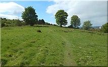 NS4760 : Grassland near Upper Glen Dam by Lairich Rig