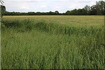 SP6229 : Field in Newton Morrell by David Howard