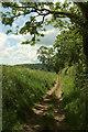 SX8854 : Bridleway to Higher Greenway by Derek Harper