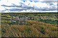 SE5299 : Bird Trap, below Barker's Ridge by Mick Garratt