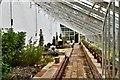 TG3120 : Hoveton Hall: Greenhouse by Michael Garlick
