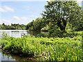 SJ4034 : Ellesmere, The Mere by David Dixon
