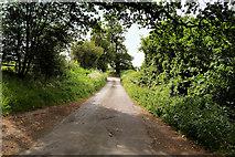 SJ4232 : Road near Colemere Farm by David Dixon