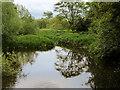 SJ5509 : River Tern, Attingham Park by David Dixon