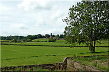 SP1876 : Pasture near Knowle south-east of Solihull by Roger  Kidd