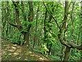 TV5498 : Friston Forest by PAUL FARMER