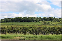 SP7217 : View from the A41, Westcott by David Howard