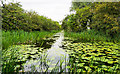 SE7843 : Water-lily pads on Pocklington Canal by Trevor Littlewood