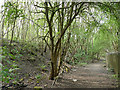 SE2917 : Path alongside a disused railway line by Stephen Craven