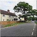 SO9218 : Dominant roadside tree in Shurdington by Jaggery