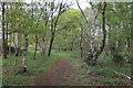 TL7472 : Reserve path on Tuddenham Heath by Hugh Venables