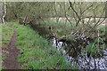 TL7473 : Wet woodland, Tuddenham Heath by Hugh Venables