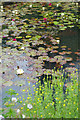 SP1742 : The lily pool, Hidcote Garden by Stephen McKay