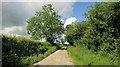 SS4412 : Lane to Rowden by Derek Harper