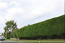 TF0923 : Large hedge on Bourne Road, Morton by David Howard