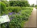 NS5766 : Herbaceous border, Kelvingrove Park by Alan Murray-Rust