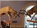NS5666 : Scotland's Wildlife, Kelvingrove Museum, Glasgow by Rudi Winter