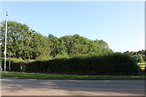 SP8790 : Woods by Rockingham Road, Corby by David Howard