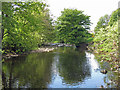 NY9138 : The River Wear upstream from Cuthbert's Spring by Mike Quinn
