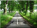 NT6425 : Tree-lined road by Philip Halling