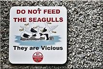 SX2553 : East Looe, Buller Quay: Hopeful seagull sign by Michael Garlick